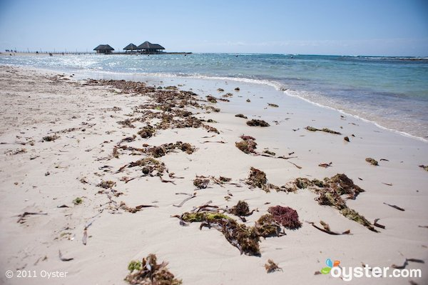 reality-that-beach-is-covered-in-seaweed.jpg